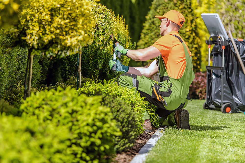 Residential Landscape Maintenance San Francisco