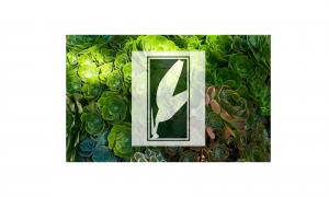 Foliate - Plant Service Northern CA